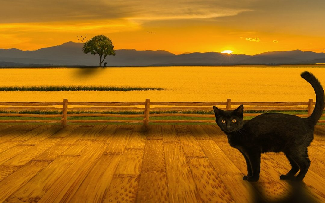 The 7 Sins of Greenwashing black cat with backdrop of a sunset