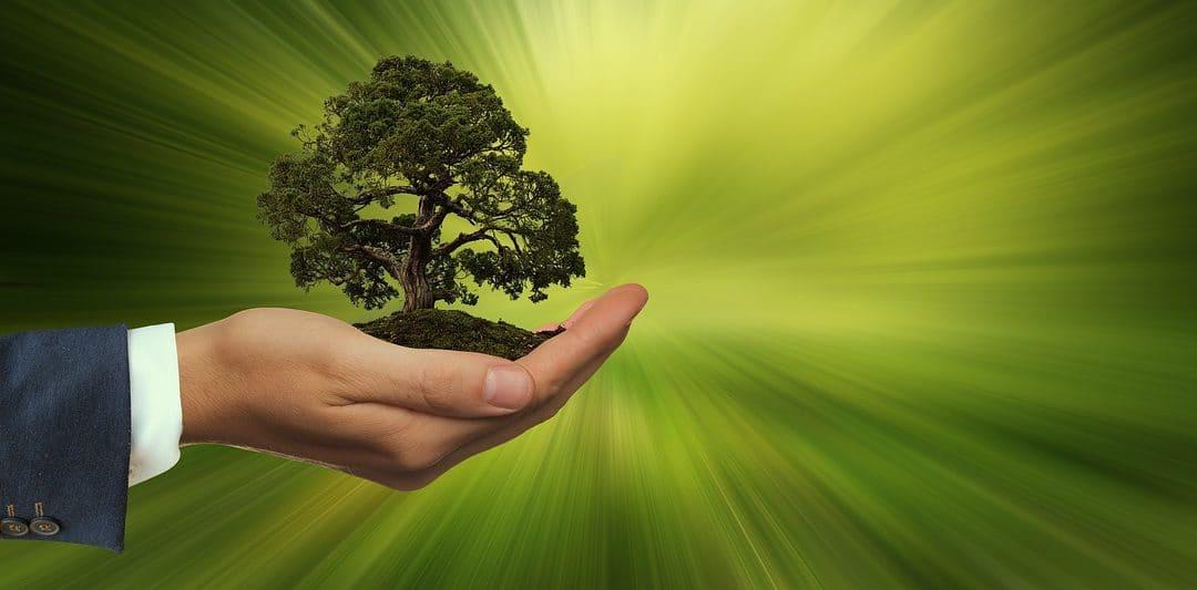 Entrepreneurs Embracing Sustainability Become Ecopreneurs P