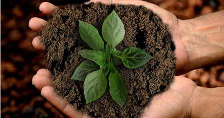 Why Your Business Should Openly Embrace Sustainability! P