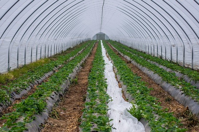 Drip irrigation is a sustainability practice that conserves water