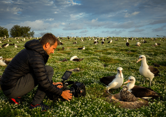 Photographing nesting albatross on Midway Atoll