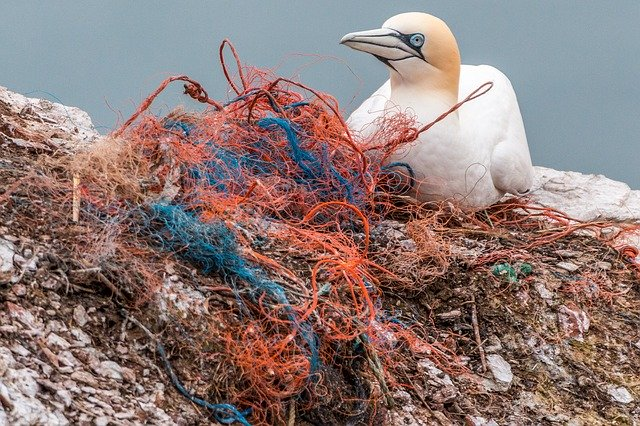 "alt=""Ocean Pollution Poses Serious Threats to Wildlife"""