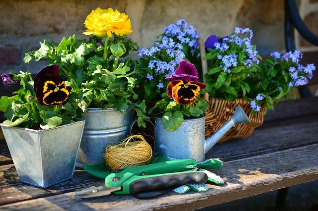 Maven Moment A Garden For Grandma Rose