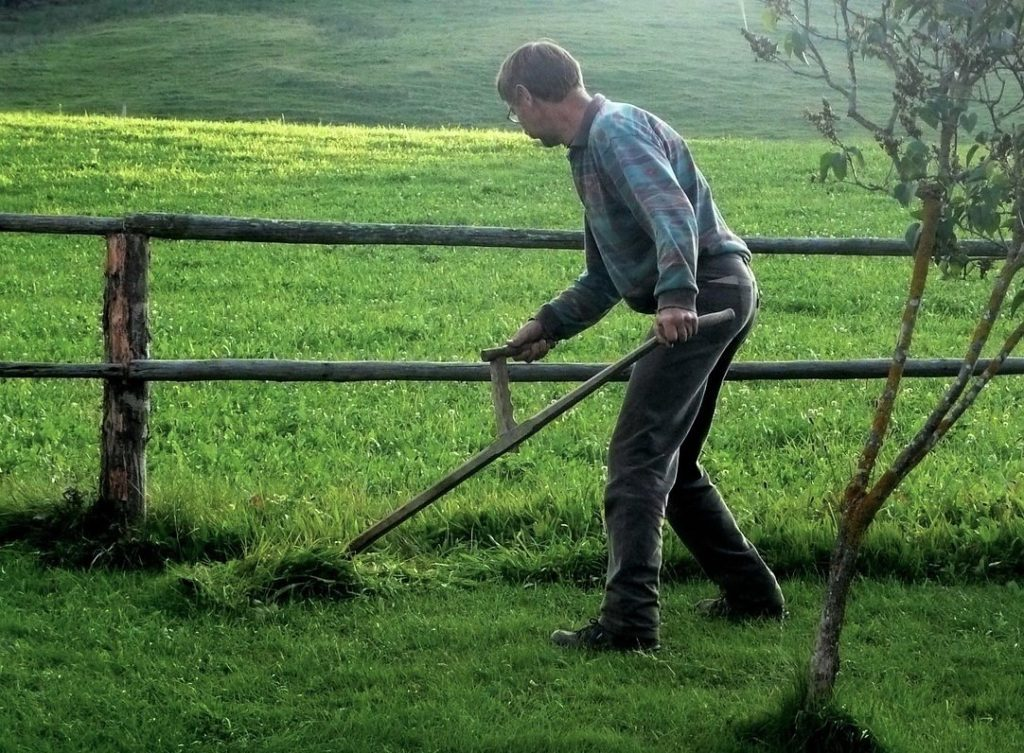 Mowing The Lawn Without Pollution