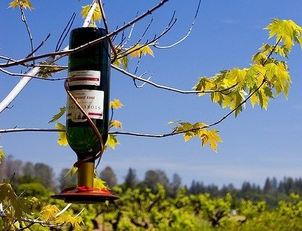 Fun Ways To Reuse Wine Bottles And Corks