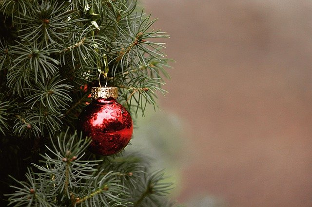 4 Ways to Have the Greenest Christmas Tree