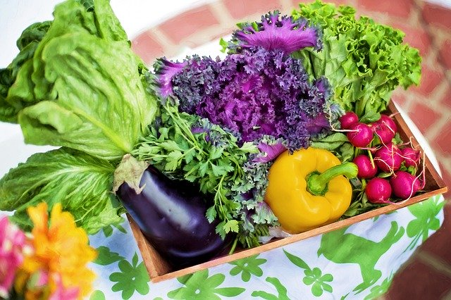 "Home ""Eco""nomics – Vegetable Gardens"