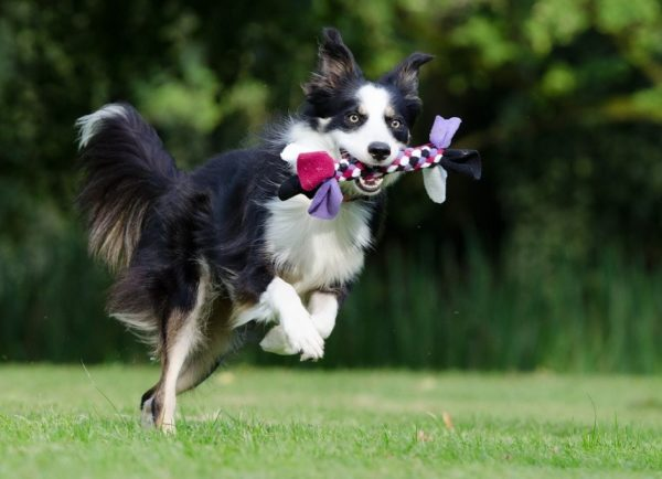 3 Upcycled Dog Toys You Can Make
