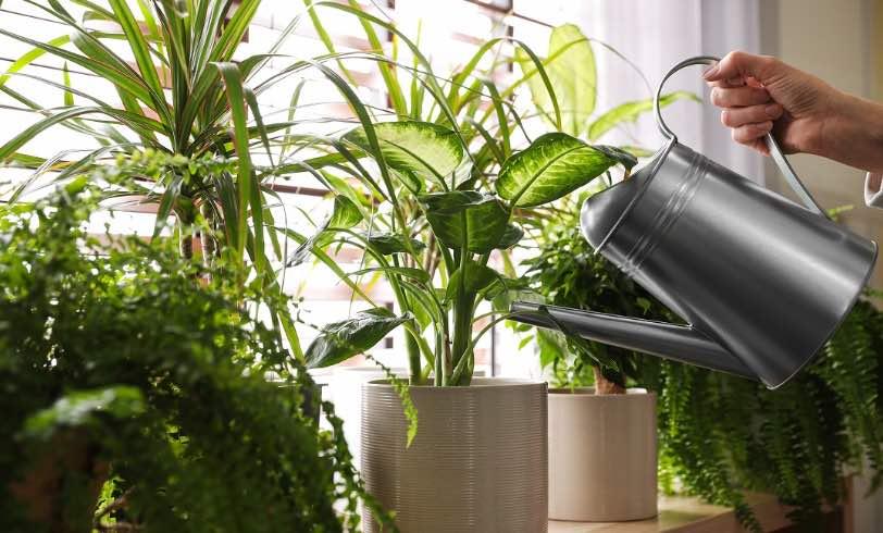 4 Zero-waste Indoor Plant Fertilizers *