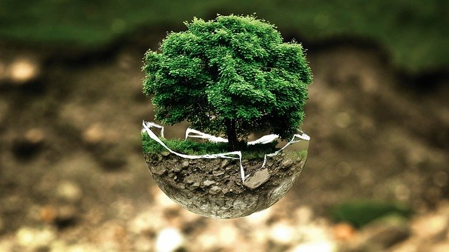 Is your tree planting scheme really green? P