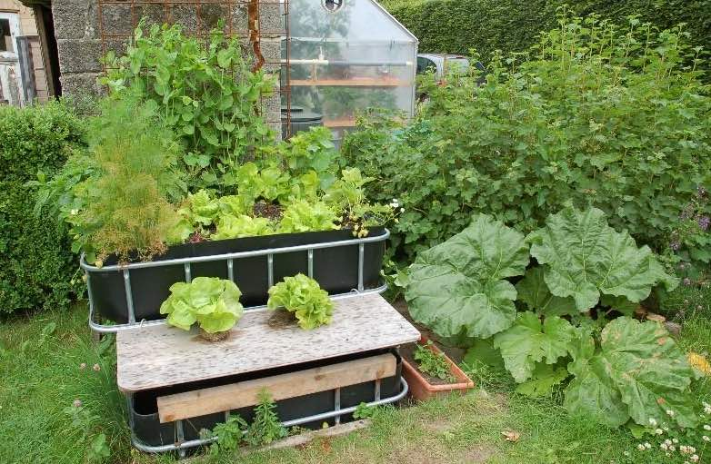How To Grow Vegetables With Aquaponics *