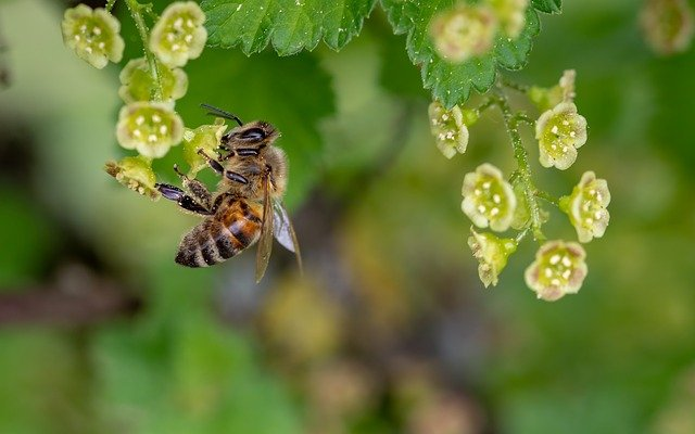 how to make your own natural bee repellent